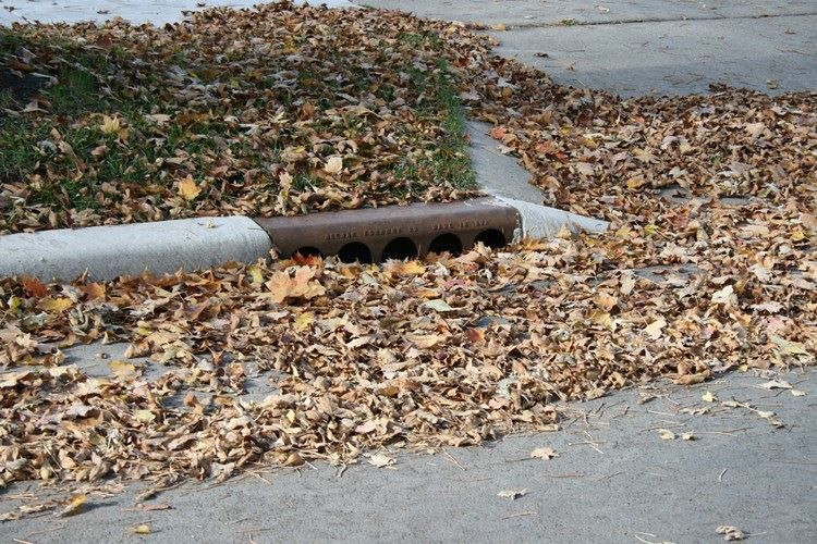 Catch basin covered in leaves and branches